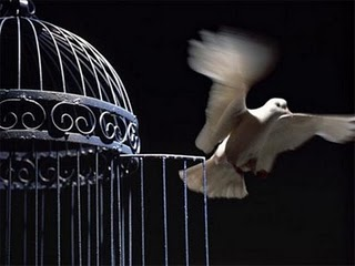 Bird and the cage